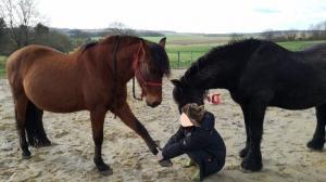 Le Stretching Ostéopathique pour votre cheval, à Viviers 07220